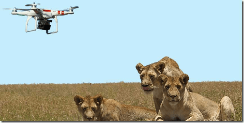 Drones and wildlife